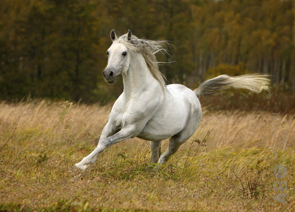 Citaten Uit Lord Of The Rings : Shadowfax uit lord of the rings overleden bit magazine