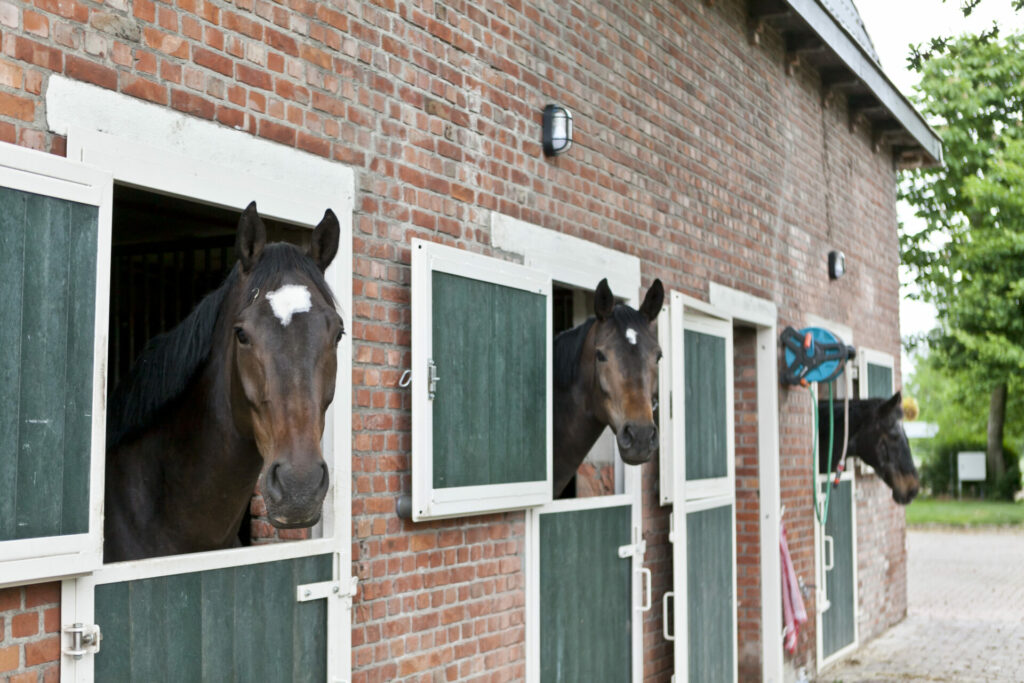 Therapiepaarden