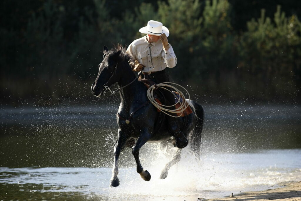 Tennessee Walking Horse western in galop