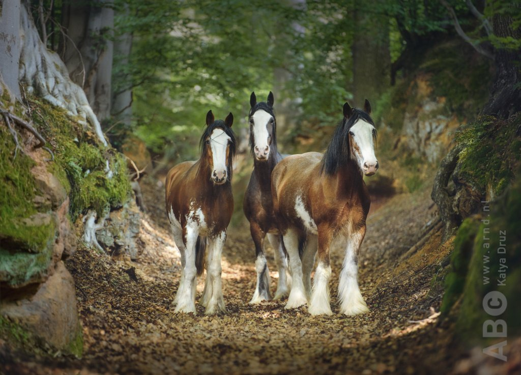 Trio in bos Clydesdale